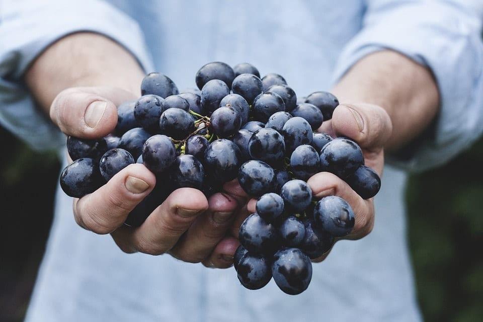 Vindruvor - Grapes - Deligate - Matsvinn