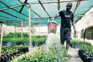 Trädgårdmästare vattnar växter i krukor på rad med en vattenkanna i metall.